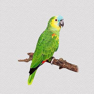 Parrot Secrets™